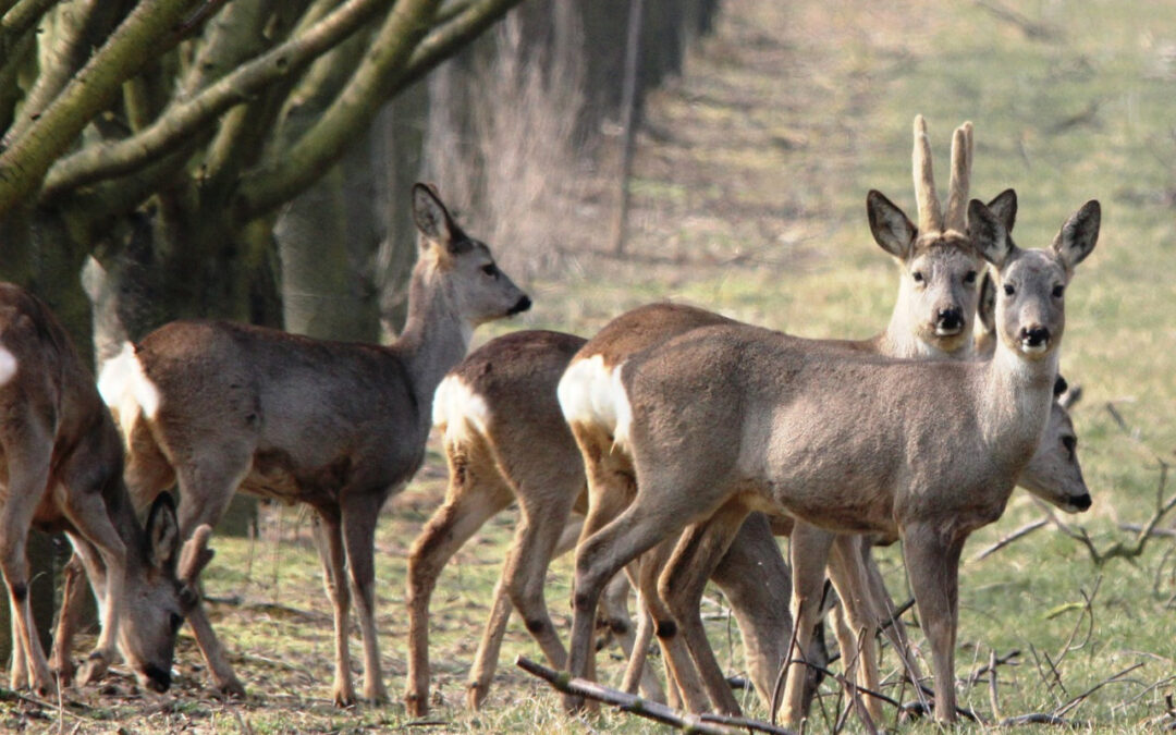 Deer Hunting on the Move:  Still Hunting for Deer, or Get off the Stump
